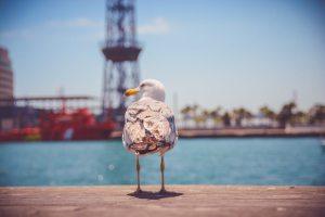 Word cursus in Rotterdam en omgeving